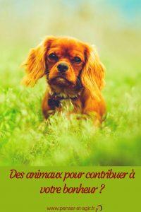 Des animaux pour contribuer à votre bonheur ?