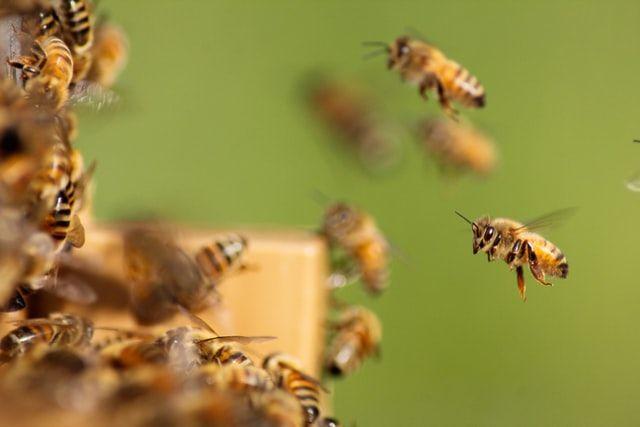 soigner la peur des abeilles