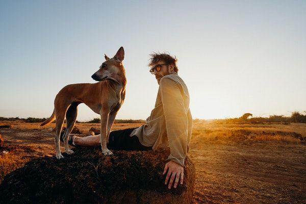 Thérapie assistée par l'animal