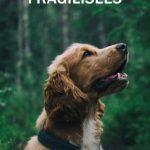 Médiation animale : une thérapie au poil pour les personnes fragilisées