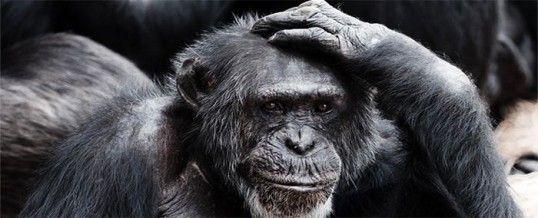 Intelligence animale : qu'est-ce que c'est exactement ?