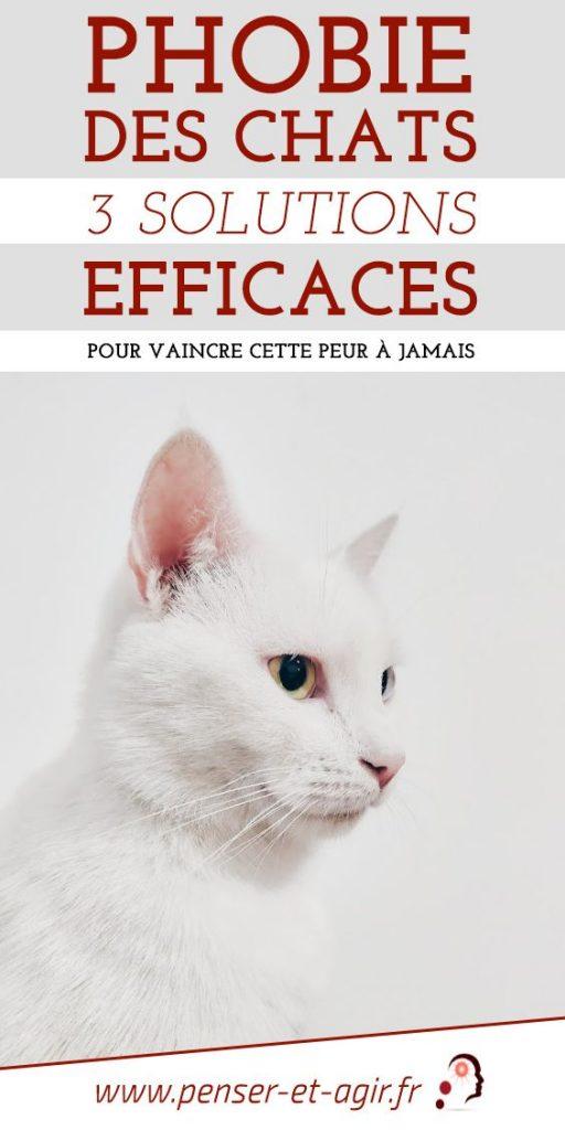 Phobie des chats : 3 solutions efficaces pour vaincre cette peur à jamais