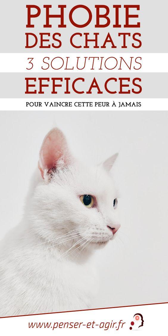 Phobie des chats : 3 solutions efficaces pour vaincre cette peur à jamais  Avez-vous la phobie des chats ou un proche ailurophobe ? Je vous propose de découvrir 3 solutions efficaces pour vaincre cette peur des chats à jamais.