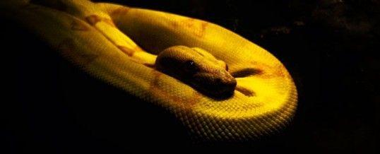 phobie des serpents