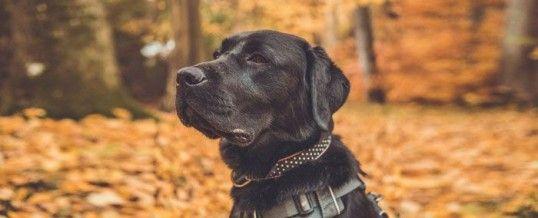 Phobie des chiens : quand le meilleur ami de l'homme est son pire ennemi