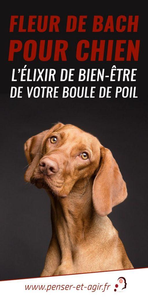 Fleur de bach pour chien : l'élixir de bien-être de votre boule de poil