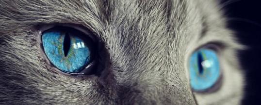 Peur des animaux : comment la reconnaître et s'en défaire ?