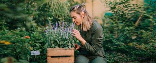 Plantes relaxantes : remèdes naturels pour combattre le stress