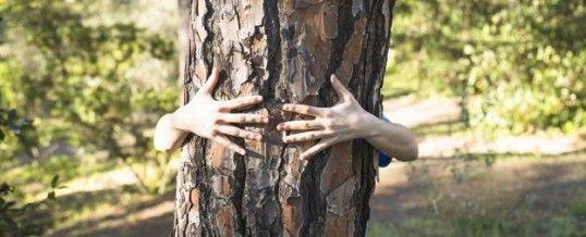 Bain de forêt : le remède naturel ultime contre le stress