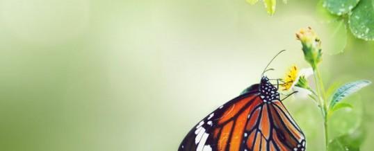 Animal totem papillon et son symbolisme: ce que vous devez savoir