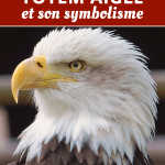 animal totem aigle